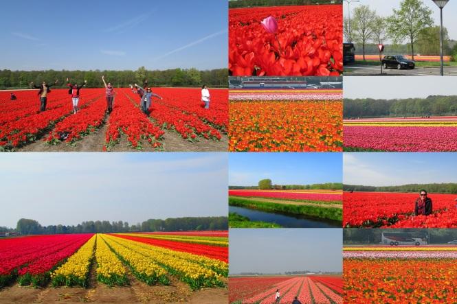 tulipanes peq